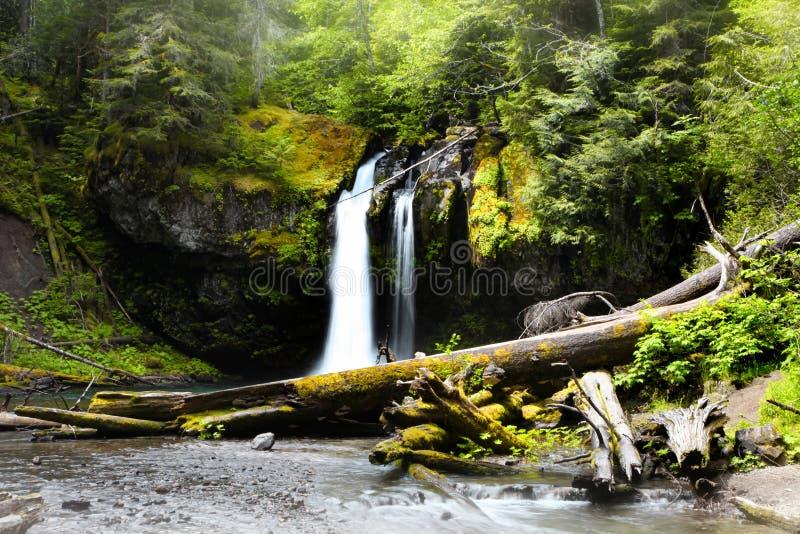 Вода падает в национальный парк Mount Rainier стоковая фотография rf