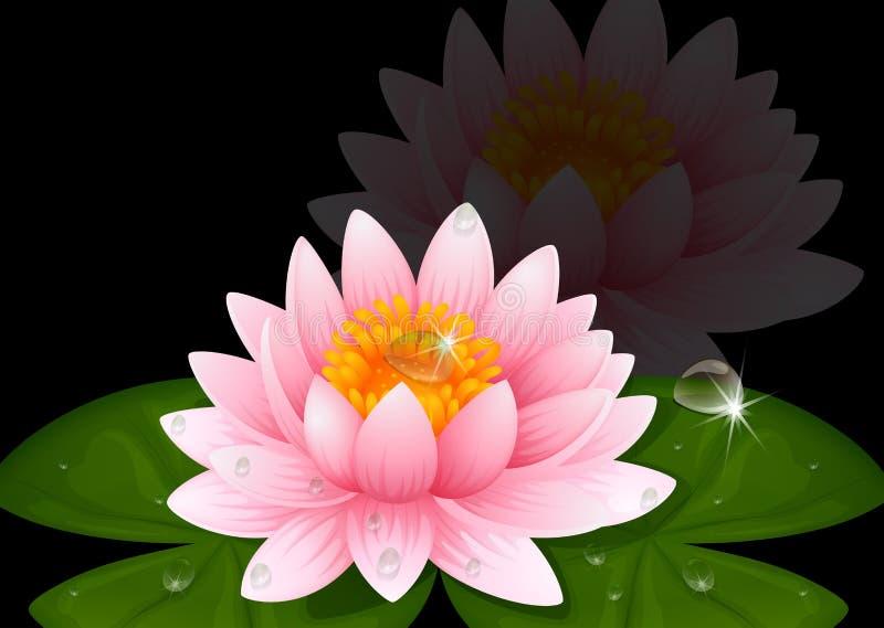 вода пинка лилии предпосылки черная иллюстрация вектора