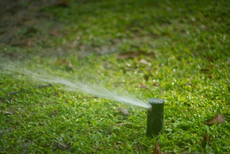 Вода спринклера распыляя над зеленой травой стоковые фото