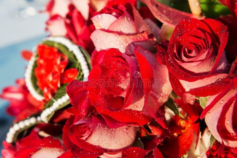 вода темных капек красная розовая стоковые изображения rf