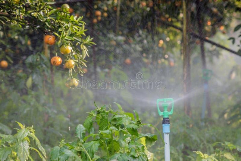 Вода для того чтобы обрабатывать землю цитрус стоковые изображения