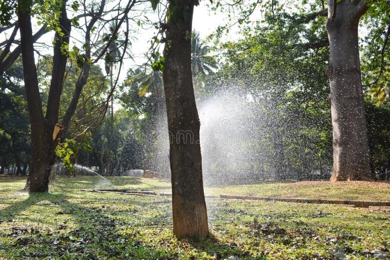 Download Вода spark2 стоковое фото. изображение насчитывающей пуща - 37928500
