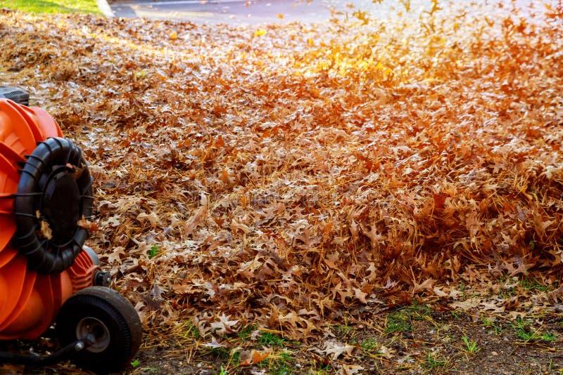 Во время человека работ осени работая сверхмощную воздуходувку лист вверх и накалите в приятном солнечном свете стоковое изображение rf