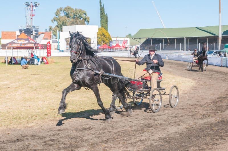 Водитель на лошад-нарисованной тележке стоковое фото rf