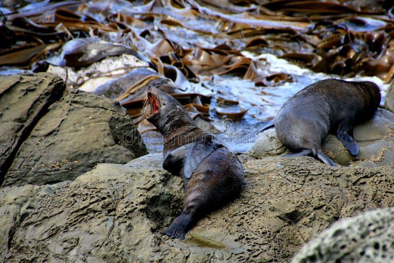 волк моря 2 стоковое фото