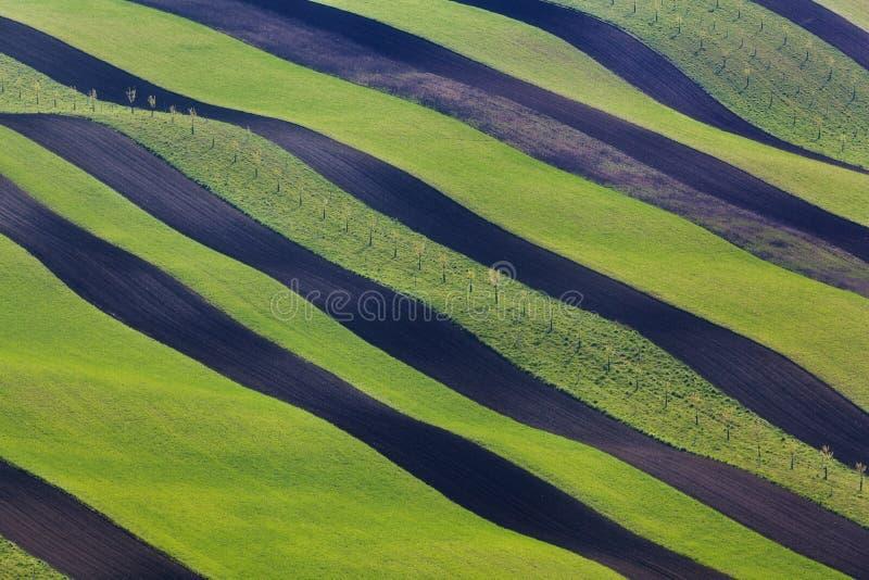 Волнистые зеленые поля Striped свертывая солнечные холмы на заходе солнца стоковая фотография