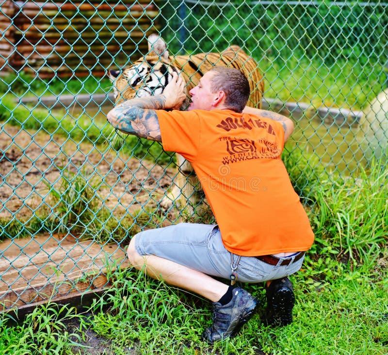 Волонтер и тигр ранчо живой природы лачуги Флориды catty стоковая фотография rf