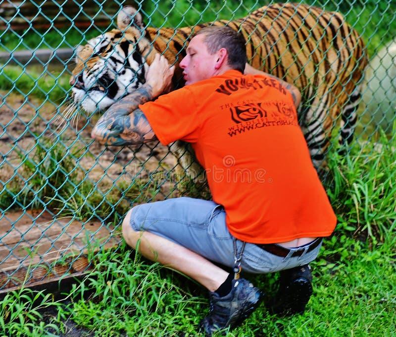 Волонтер и тигр ранчо живой природы лачуги Флориды catty стоковое изображение