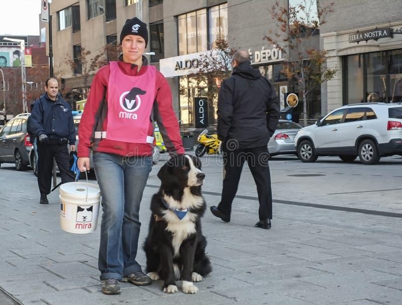 Волонтер собаки Миры стоковая фотография