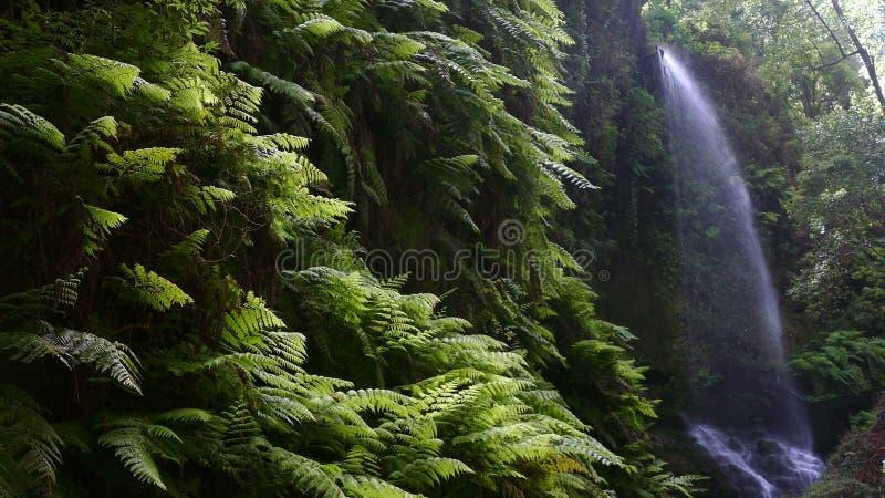 ` Водопада ` лип, в острове Ла Palma, Канарские острова, Испания видеоматериал