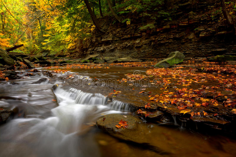 Водопад в лесе осени стоковая фотография rf