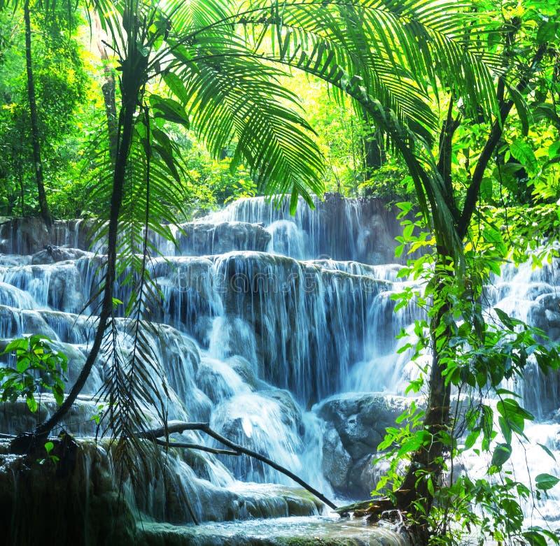 Водопад в Мексике стоковое фото rf