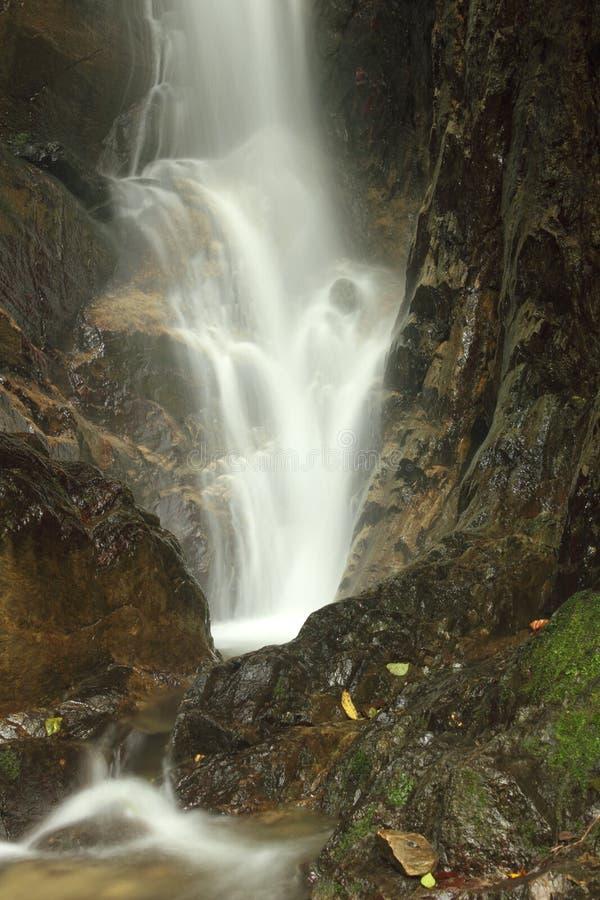 Водопад в национальном парке Henri Pittier, Венесуэле стоковые изображения rf