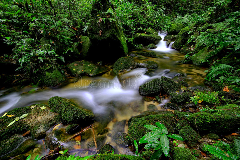 Водопад в дождевом лесе стоковые изображения