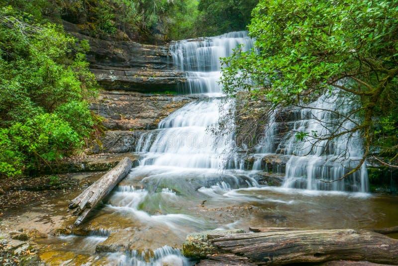 Водопад в тропическом лесе, Тасмания стоковое изображение rf