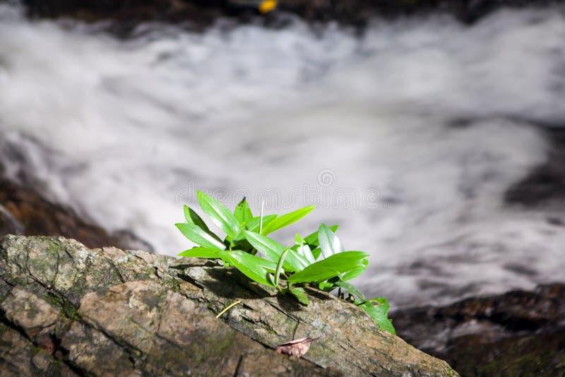Водопад в Huay к krabi Таиланду стоковые изображения rf