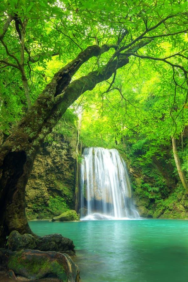 Водопад леса на соотечественнике водопада Erawan, Kanchanaburi, тайском стоковые фотографии rf