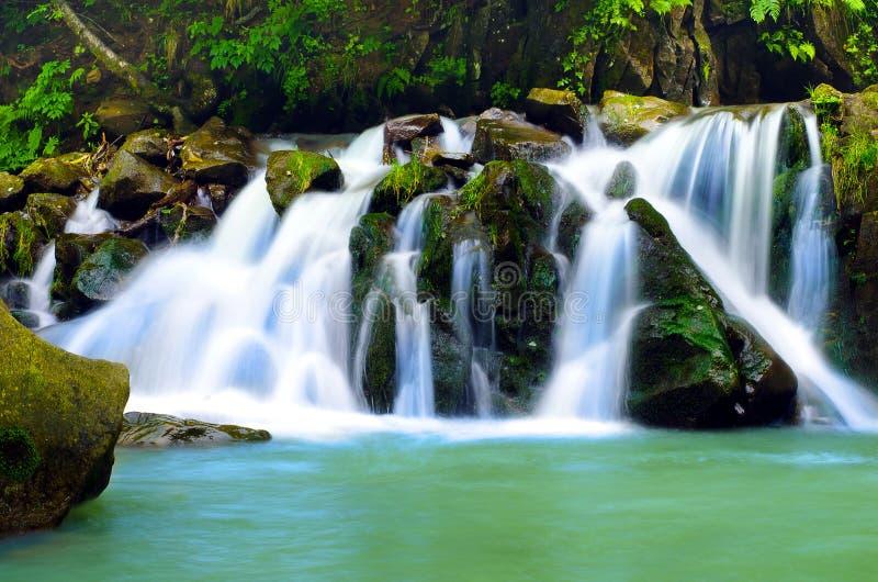 Водопад, лес стоковое фото rf