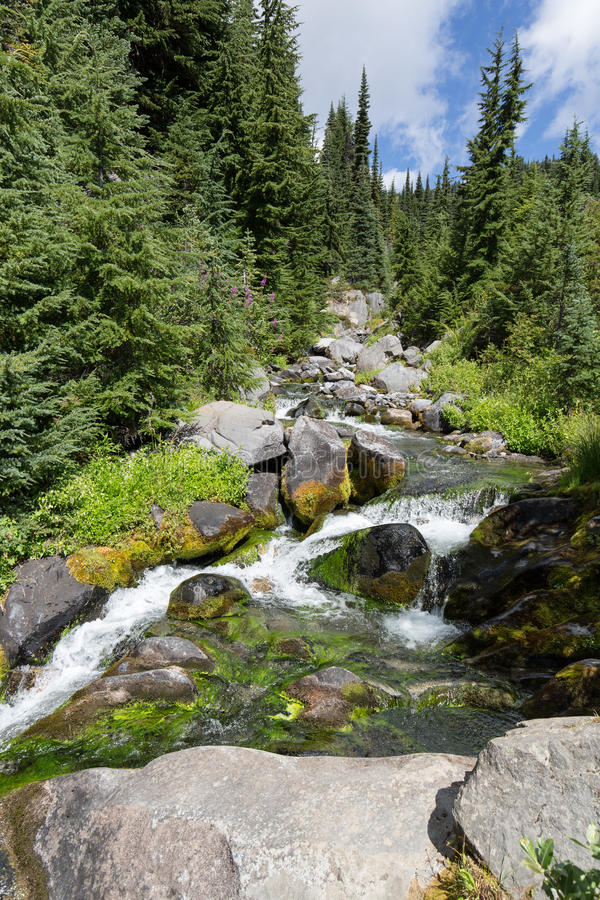 Водопад на реке рая стоковое фото