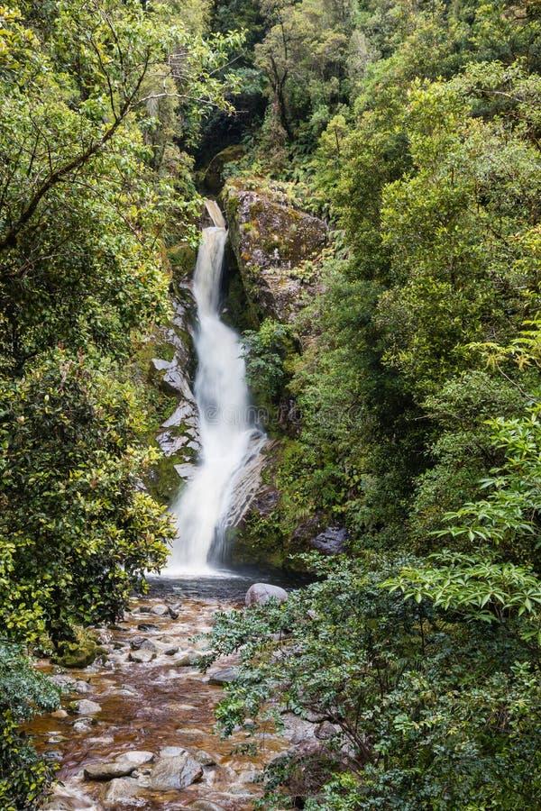Водопад Новой Зеландии в лесе стоковые изображения rf