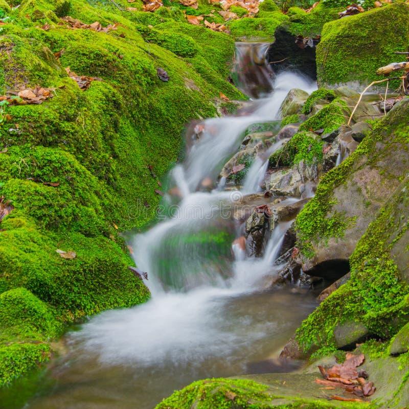Водопад ручейка леса между мшистыми утесами стоковые фото