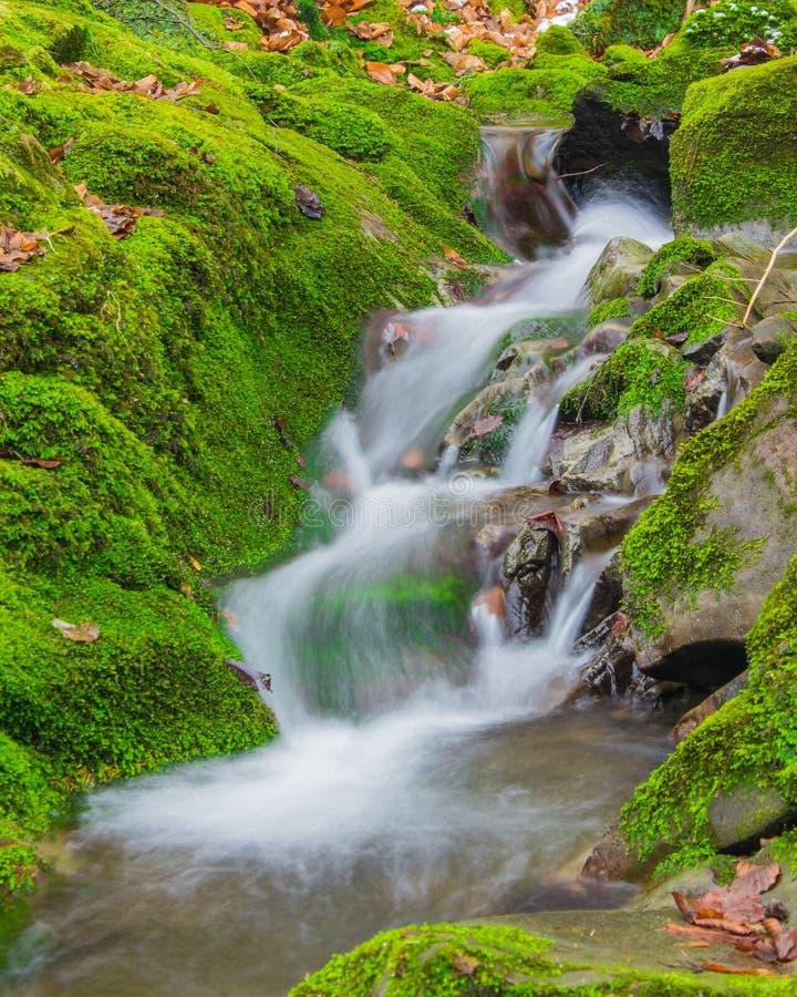 Водопад ручейка леса между мшистыми утесами стоковое изображение rf