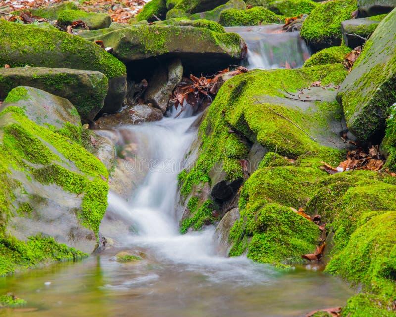 Водопад ручейка леса между мшистыми утесами стоковые изображения rf