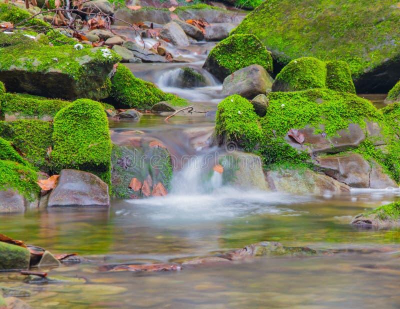 Водопад ручейка леса между мшистыми утесами стоковые изображения
