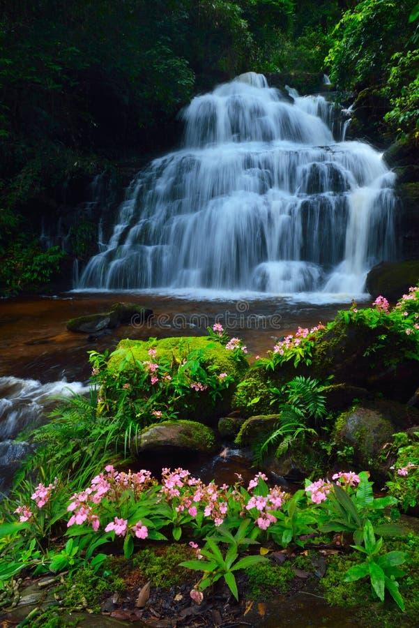 Водопад цветка стоковая фотография rf
