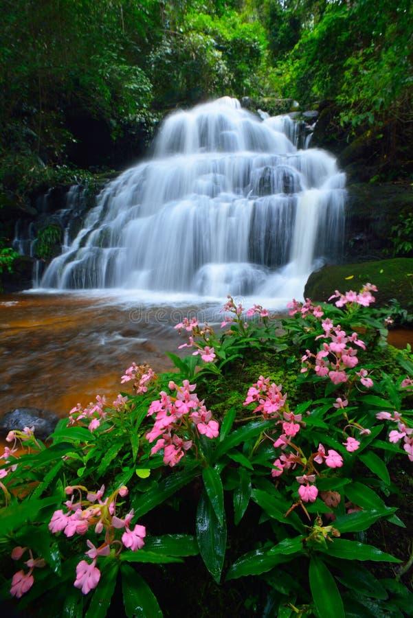 Водопад цветка стоковые фото