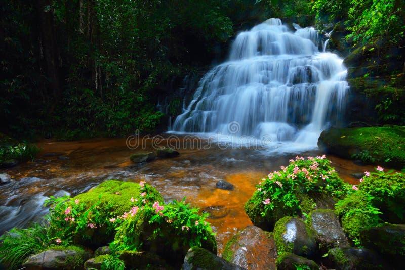 Водопад цветка стоковое фото rf