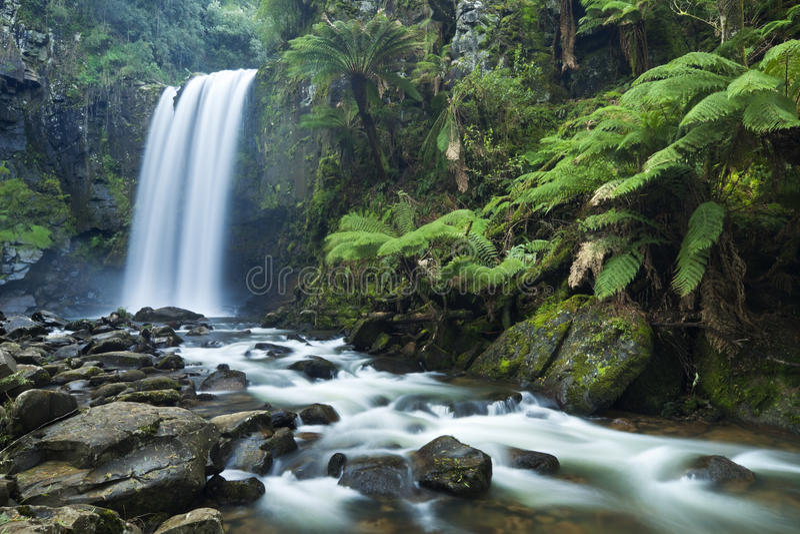 Водопады тропического леса, Hopetoun падают, большое Otway NP, Виктория, стоковые изображения rf
