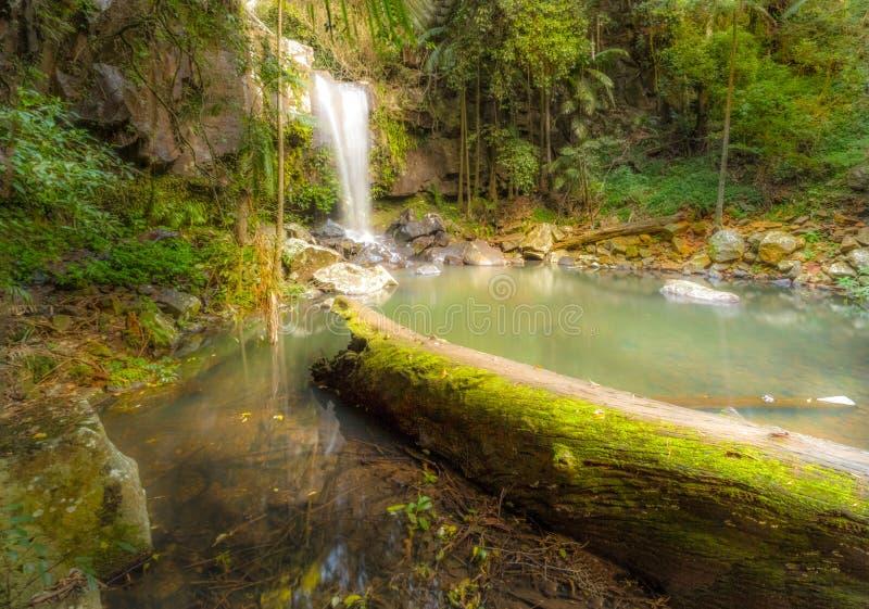 Водопады Tamborine стоковые фото