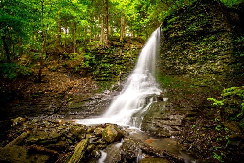 Водопад Bucktail в северной части штата Нью-Йорке стоковые фото