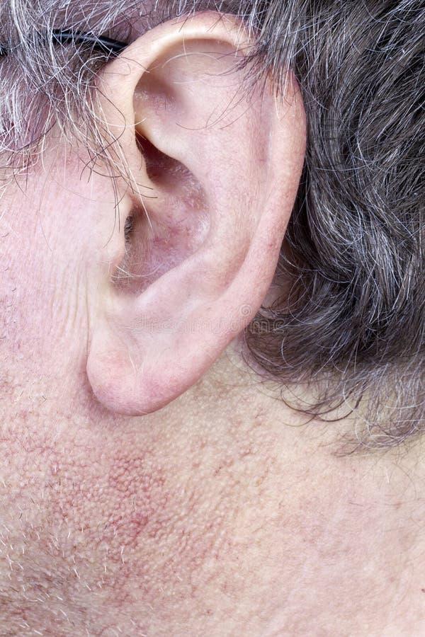 Волосатое ухо человека стоковое изображение