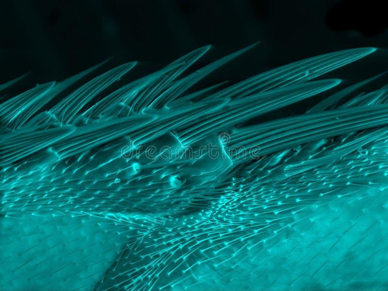 Волосы крыла мухы стоковые фото