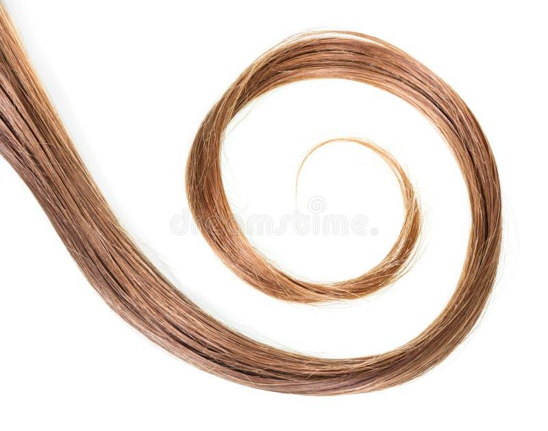 Волосы скручиваемости коричневые естественные изолированные на белизне стоковые фото