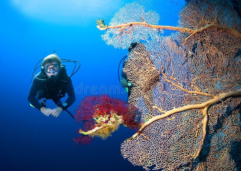 Водолаз и коралл стоковое изображение