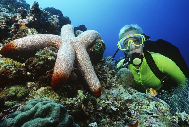 Водолаз акваланга наблюдая большие морские звёзды стоковое фото rf