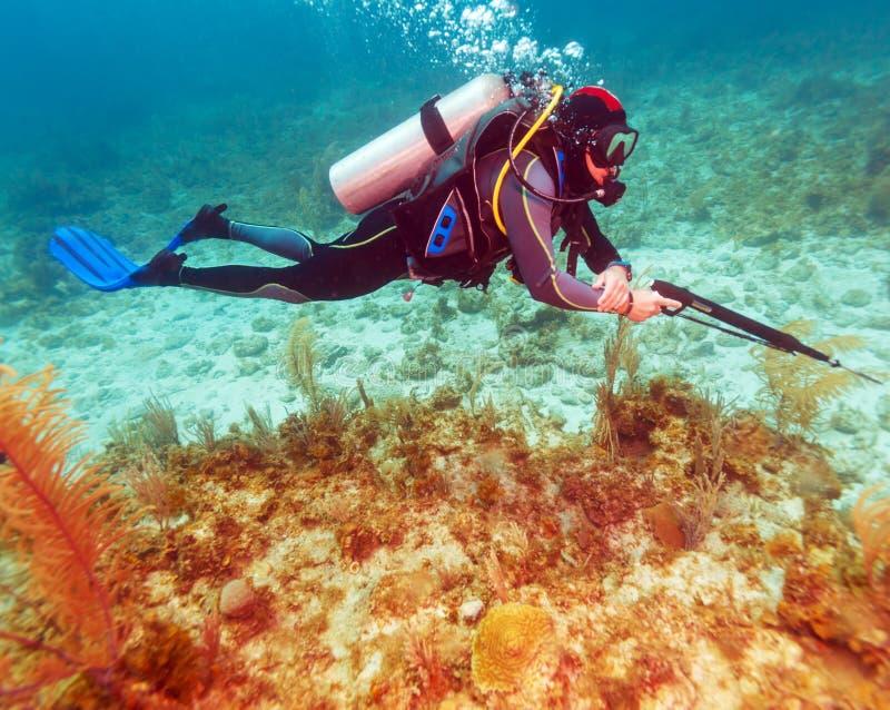 Водолаз акваланга с оружием копья стоковая фотография rf