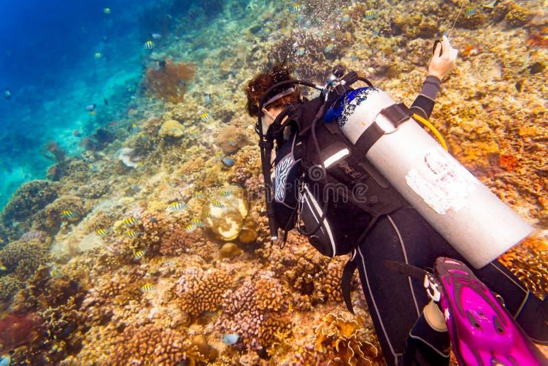 Водолаз женщины на тропической скубе кораллового рифа в тропическом ocea стоковые изображения