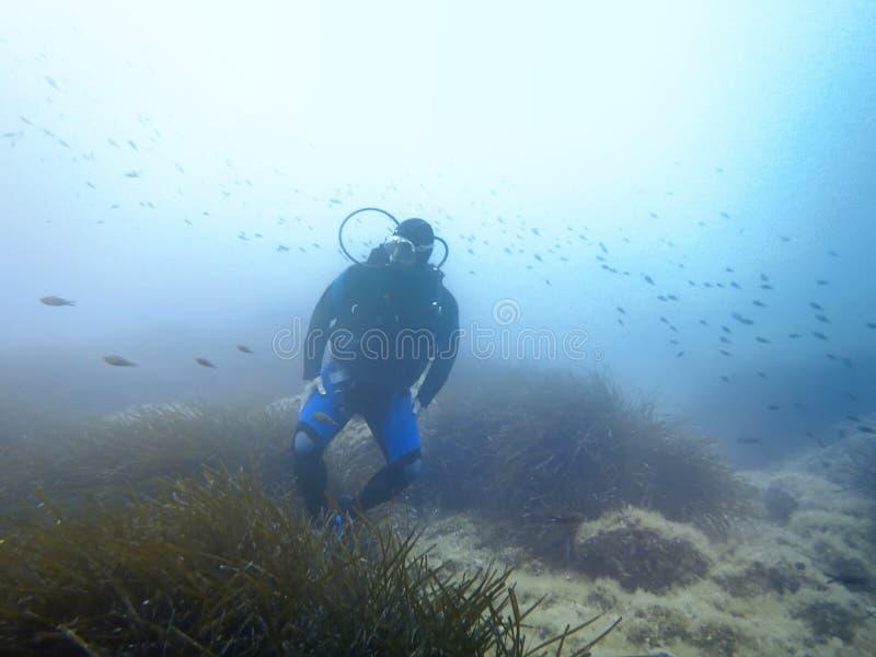 Водолаз и рыбы акваланга подводные стоковые фотографии rf