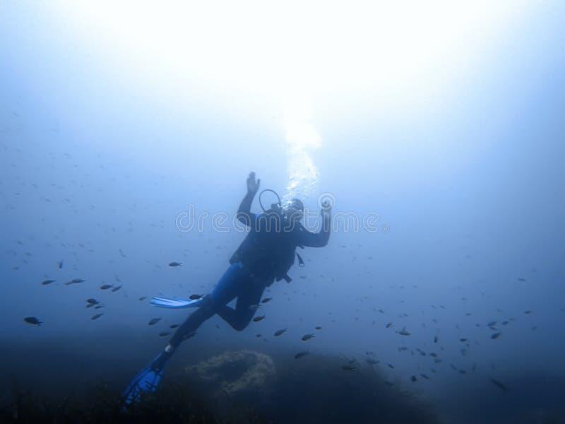 Водолаз и рыбы акваланга подводные стоковое изображение rf