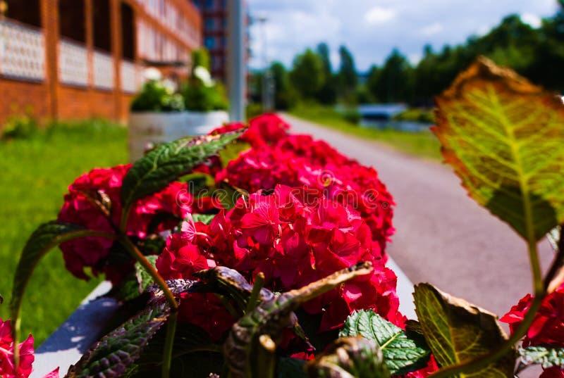 Во первых зацветать цветков летом стоковая фотография rf
