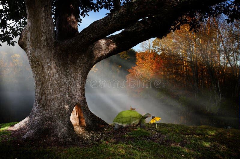 Волшебная земля леса стоковые фото