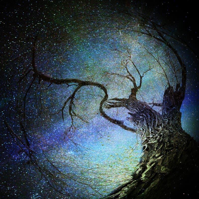 Download Волшебное дерево иллюстрация штока. иллюстрации насчитывающей ноча - 33734791
