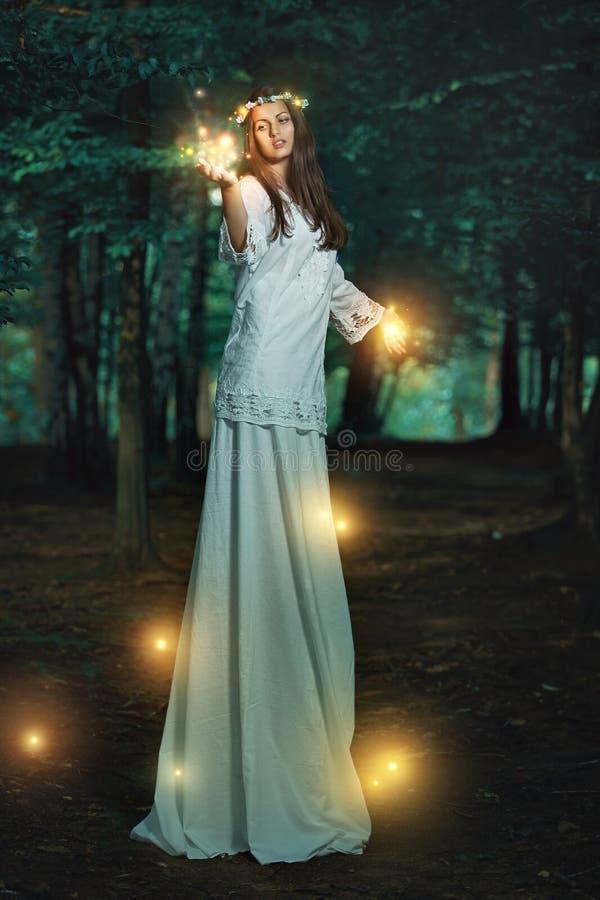 Волшебные света в fairy лесе стоковые изображения rf