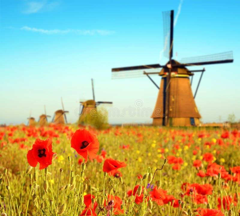 Волшебный ландшафт с полем маков и мельниц ветра на sunn стоковая фотография rf