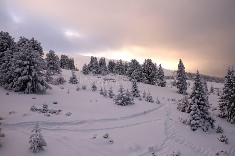 Волшебный взгляд парка зимы внутри стоковое фото rf