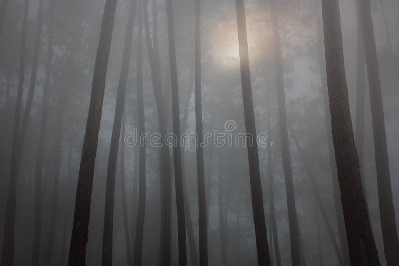 Волшебный туманный лес на заходе солнца стоковое изображение